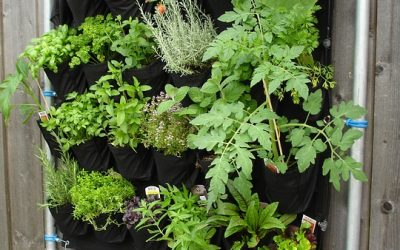 How to Create a Great Garden in a Small Space