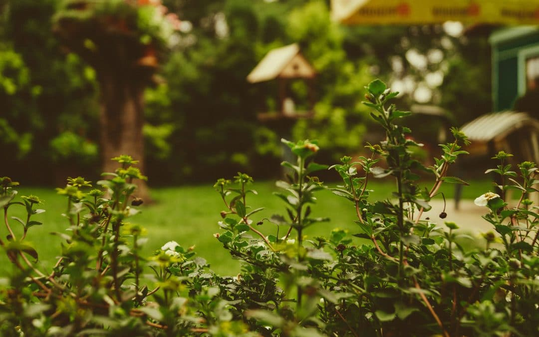 Plant Selection: Top 5 Things to Consider for Your Garden