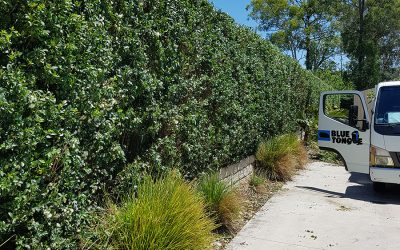 What's the Difference between Hardscaping and Softscaping?