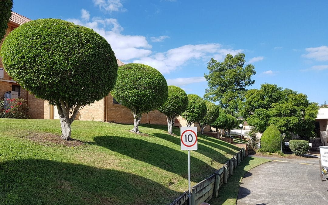Beautiful Landscaping for Your Brisbane Property