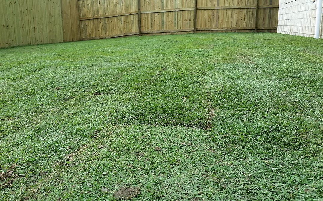 The Pros and Cons of Watering Turf in Summer Heat