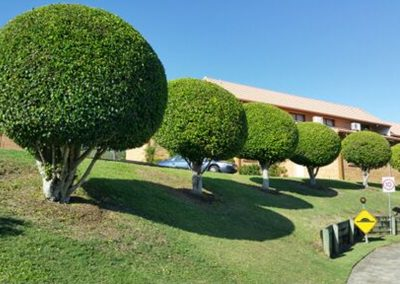 Homes Landscaping1