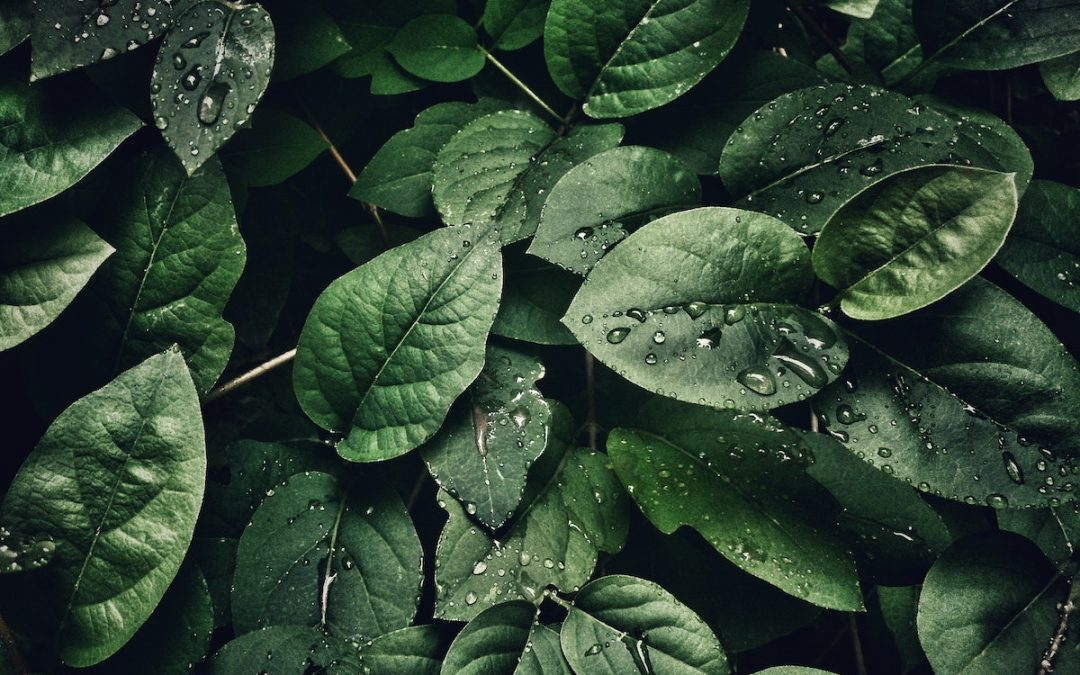 9 Proven Ways to Save Water in your Garden