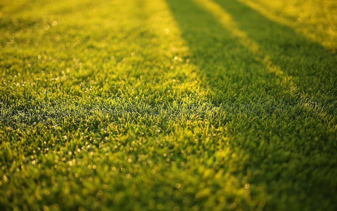 What's the Best Time to Water Your Lawn?