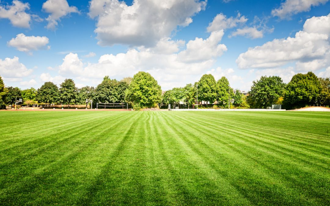 Why Your School Ground's Landscape Maintenance is Important