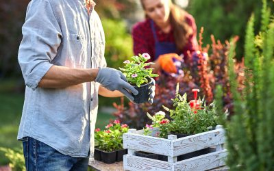 Top 3 Garden Design Tips to Get the Most Out of Your Garden