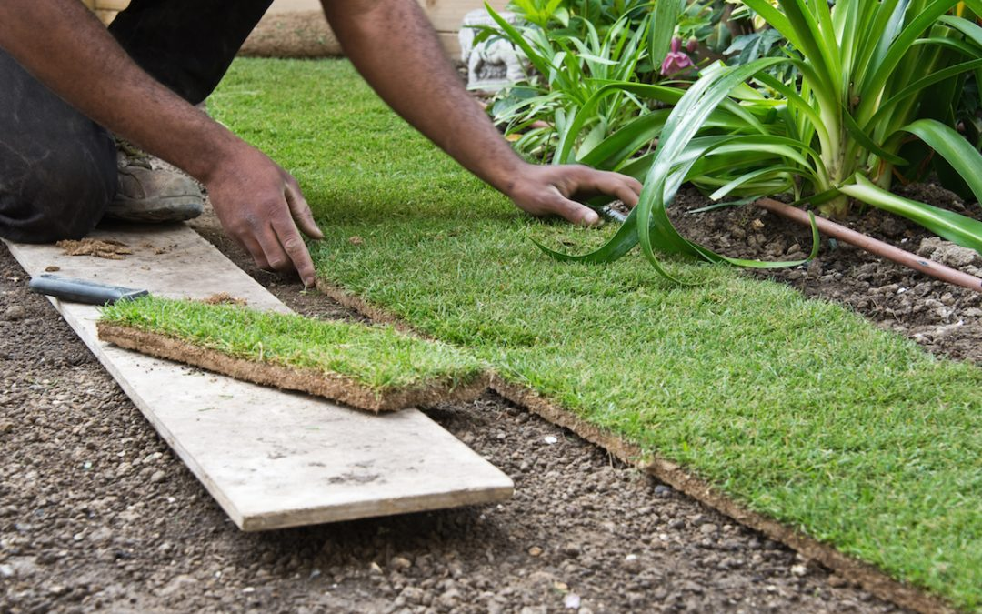 Tips to Maintain and Revitalize Your Landscape Garden