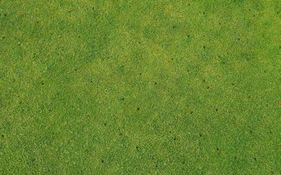 How and why to aerate your lawn